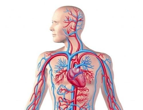 Disturbi cardiovascolari e cervello, qual è la connessione?